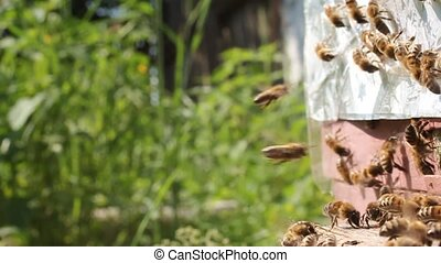 Active movement of bees near the en