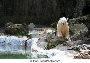 Active Polar Bear