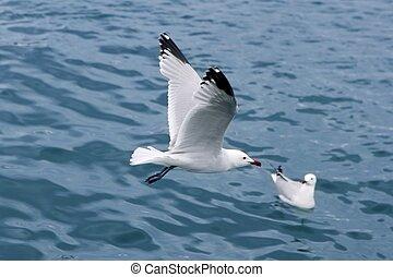 active sea gulls seagulls over blue sea ocean