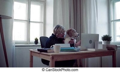 Active senior woman with laptop and dog working in home office.