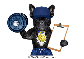 active sport dog - dog as gym and personal trainer with gold...