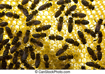Active work of colony of bees