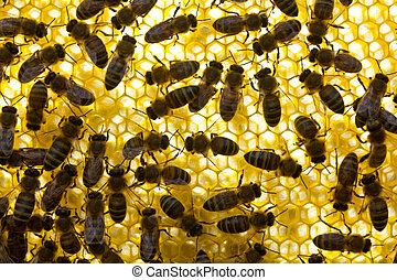 Active work of colony of bees. Life and work of colony of bees.
