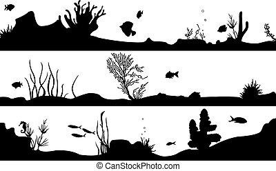acuático
