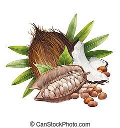 acuarela, cacao, coco, fruta