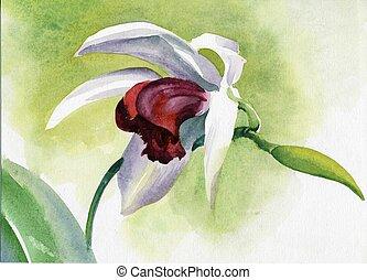 acuarela, flor, collection:, iris