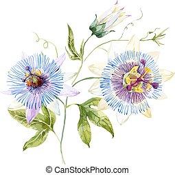 acuarela, flor de la pasión