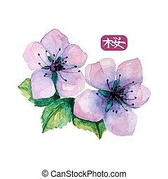 acuarela, flor, japonés, sakura., elegante, hierogliph,...