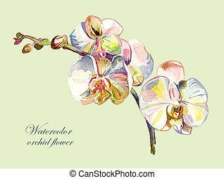 acuarela, flor, orquídea