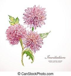acuarela, flowers., vector, chrysanthemum., invitación,...