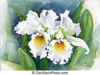 acuarela,  iris, flor,  collection: