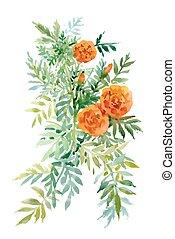 acuarela, mano, dibujado, pintura, con, naranja, caléndulas, blanco, fondo.