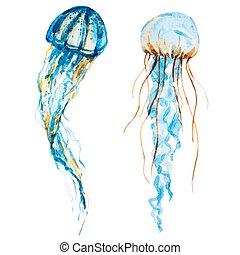 acuarela, medusa