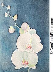 acuarela, phalaenopsis