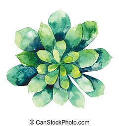 acuarela, suculento, verde
