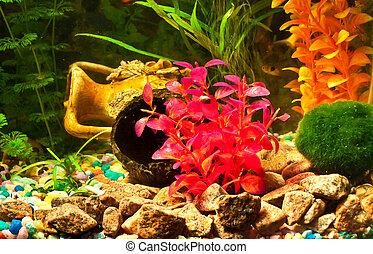acuario, con, plantas, y, pez