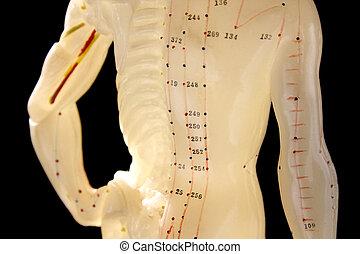 acupuncture, figur, 3