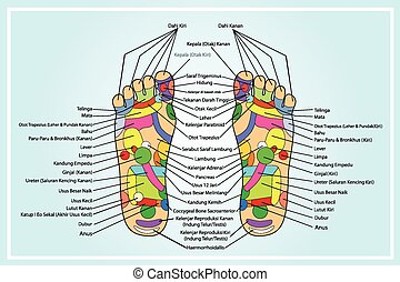 scheme of foot Traditional alternative heal, Acupuncture
