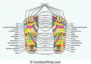 Acupuncture - Foot Scheme - Traditional alternative heal,...