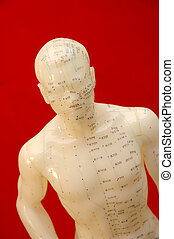 Acupuncture Model - Acupunture model on a red background.