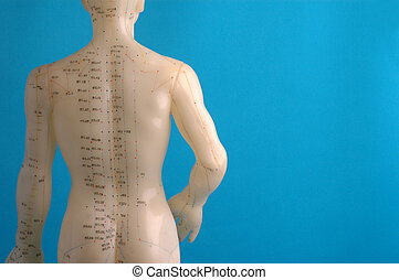 Acupuncture Model Back - Cropped close up of an acupuncture...