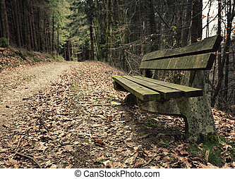 Adandoned wooden bench in autumn forest
