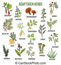 Adaptogen herbs. Hand drawn set of medicinal plants -...