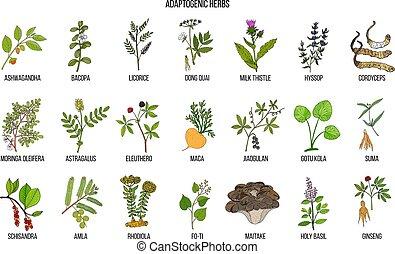 Adaptogen herbs. Hand drawn vector set of medicinal plants