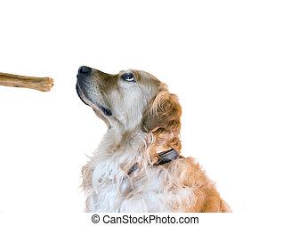 addestramento, cane