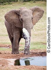addo, parc, éléphant