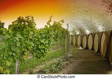 adega, winery, vinho