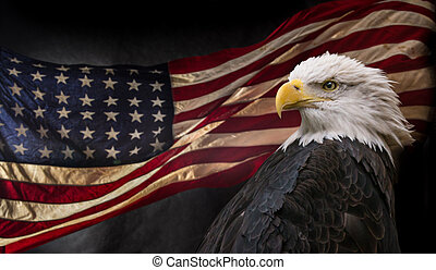adelaar, amerikaan, kaal, flag.