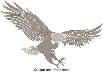 adelaar, kaal, silhouette