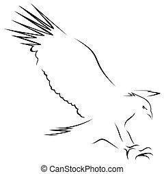 adelaar, open, vleugels