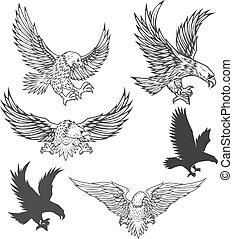 adelaar, vecto, vliegen, vrijstaand, illustratie, achtergrond., witte