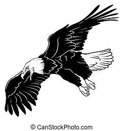 adelaar, vliegen, kaal
