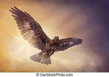 adelaar, vliegen