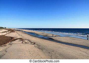 adelaide, playa, australia, largs, walkers, tarde, por