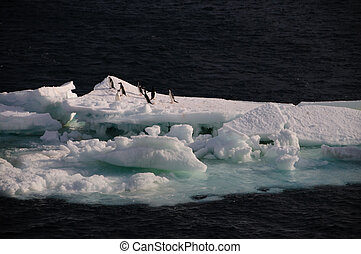 Adelie Penguins on an ice shelf in the Weddell Sea - A group...