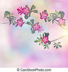adenium, rosa, desierto, flores, árbol, rosa