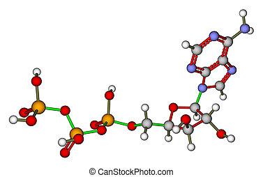adenosine, molecular, (atp), estructura, triphosphate