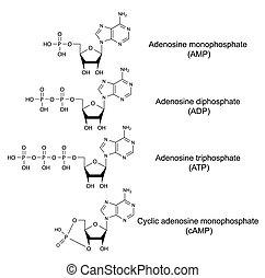 Adenosine phosphates - Structural chemical formulas of...