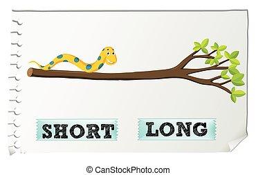 adjectives, kort, lang, tegenoverstaand