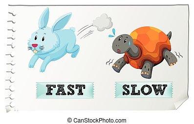 adjectives, lento, rapidamente, oposta