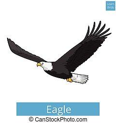 adler, erzieherisch, spiel, vektor, lernen, vögel