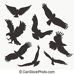 adler, weißes, fliegendes, silhouette, hintergrund