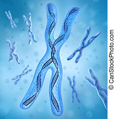 adn, brins, chromosome, x