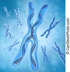 adn, hebras, cromosoma, x