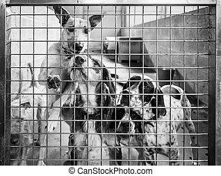 adopción, perros
