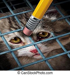 adoption, animal